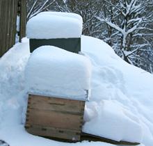 Wissenswertes: Haben Imker Eigentumsrechte an ihren Honigbienen?