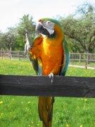 Kreischende Papageien nur 2 Stunden pro Tag zumutbar
