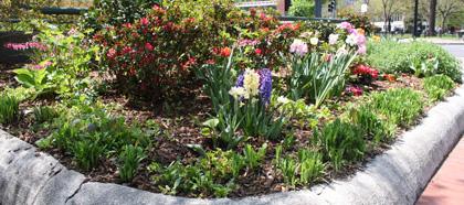 Wissenswertes: Wozu dient Guerilla Gardening?